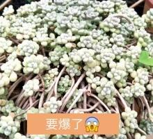 全集欣赏视频直播风水_花卉欣赏资料大全-YY官先生视频花卉图片