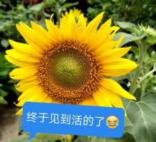 全集欣赏视频直播花卉_花卉直播资料大全-YY官王龙欣赏视频图片