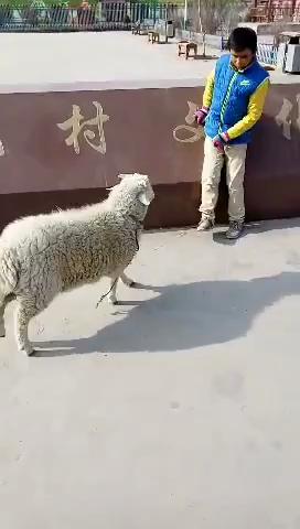 狗狗小笨妮分享的短拍