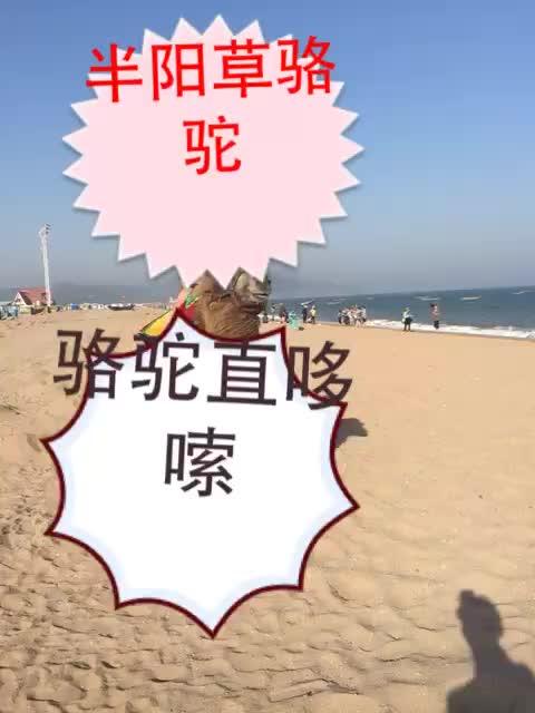 MC半阳直播小视频 MC半阳直播间 MC半阳直播间回放视频 YY LIVE